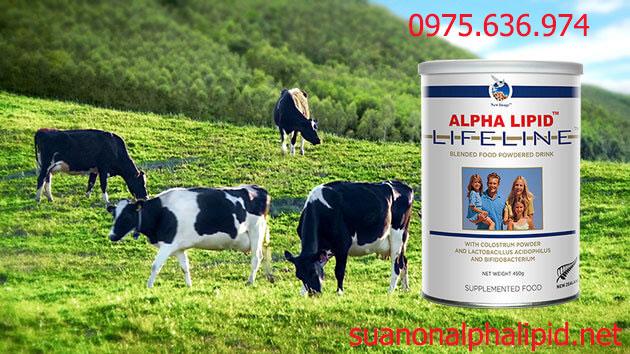 Nguồn sữa non từ bò