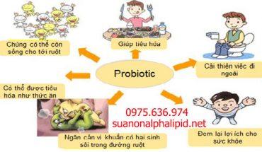 tac-dung-cua-probiotic-co-trong-sua-non