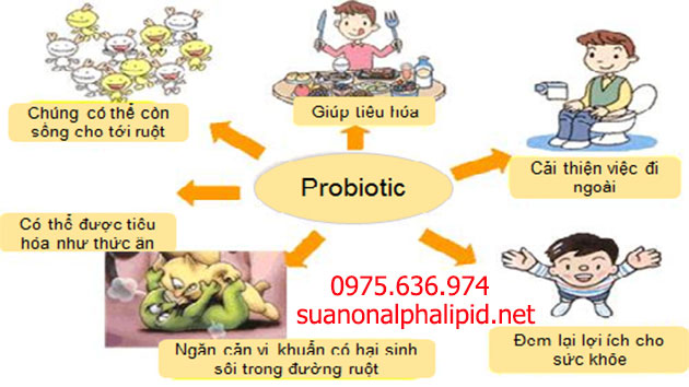 Vai trò của lợi khuẩn Probiotics